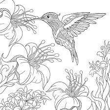 hummingbirds and flowers drawing. Modren Hummingbirds Coloring Page Of Hummingbird And Hibiscus Flowers Freehand Sketch Drawing  For Adult Antistress Colouring Book To Hummingbirds And Flowers Drawing M