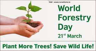 world forestry day st plant more trees save wild life  world forestry day 21st plant more trees save wild life tree quote
