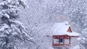 Japan Winter Forest Wallpaper 66295