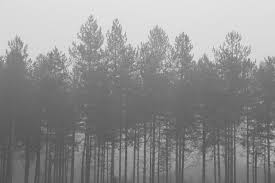 black and white background tumblr. Foggy Forest Background Tumblr Awesome Black And White CloudPix On