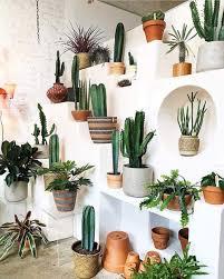 Pin by Arnold Cerrato Ortiz on Desert VIBEZ | Plant decor, Plant ...