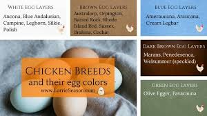 Farm Fresh Eggs Your Easy Guide From A Chicken Mama