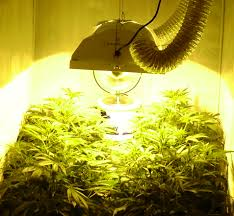 best lighting for growing cans