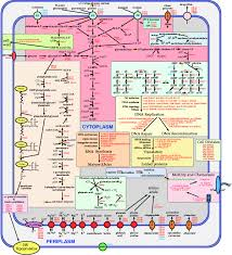 pathways quotes like success    metabolic pathways diagram