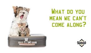 boarding cats while on vacation. Simple Boarding Vacationing Without Your Pets 2 Inside Boarding Cats While On Vacation