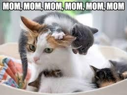 cute-cat-mother-kittens-eating1.jpg via Relatably.com