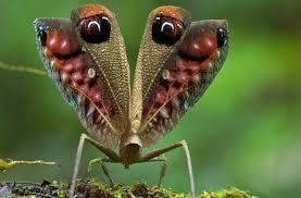 Ránking de las especies más raras del mundo
