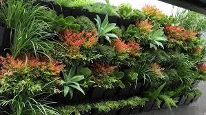 best garden plants.  Best To Best Garden Plants N