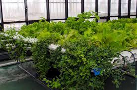 Indoor Garden Indoor Garden Kit 6 Popular Gardening Kits Indoor Plants Expert