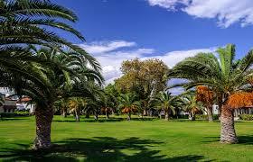 UAE Tops Region In Fruit Bearing Palm Trees  Emirates 247Palm Tree Orange Fruit