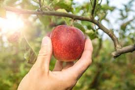 Image result for picture of fruit in hand