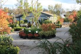 youngs garden center designs