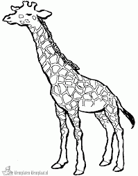 Kleurplaten Giraf Kleurplaten Kleurplaatnl