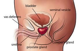 Akut prostatit behandling