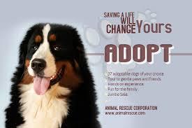 Lost Pet Flyer Maker Pet Adoption flyer template or social media post Lost Pet and Pet 45