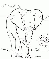 Small Picture Giraffe color page animal coloring pages color plate coloring