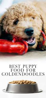 Best Puppy Food For Goldendoodles So He Grows Up Big And Strong