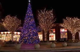 Christmas Lights On Outdoor Trees Photo  3  Warisan Lighting