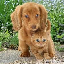 Bigger cousin. Puppy protecting kitten (=^・^=)   Baby animals, Cute baby  animals, Animals