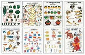Educational Charts Manufacturers In India Zoology Ii Charts Biology Educational Charts