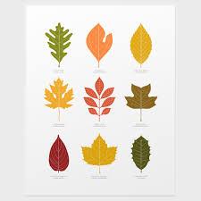 Identification Chart For Leaves Leaves Print