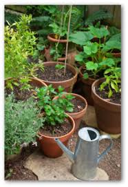 Small Picture Container Vegetable Gardening Tips Techniques and Ideas