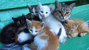 cats and kittens pictures. Exellent Kittens Mother Cat With Kittens And Two Feral Puppy In The Bushes Throughout Cats And Kittens Pictures E