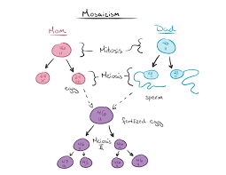 what is down syndrome article khan academy diagram of genetic transmission of mosaicism