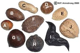 Image result for what kind of nut are you