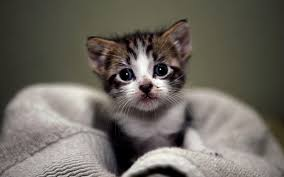 cute cats and kittens wallpapers. Beautiful Kittens Cute Kittens Wallpapers Hd Images U0026 Pictures  Becuo Throughout Cats And L