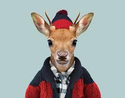 zoo animals in clothes. Fine Animals White Tailed Deer Calf Intended Zoo Animals In Clothes