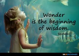 Socrates Quotes On Love Impressive Wonder Is The Beginning Of Wisdom Socrates Quote