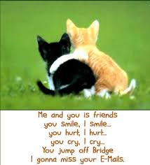 Quotes About Pets And Friendship Magnificent Pets N More Top Cat Quotes