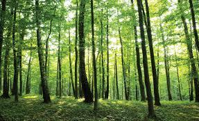 Bomen Bladeren Fotobehang 186p8 Fotobehangkoopjesnl