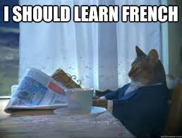 I should learn French - morning realization newspaper cat meme ... via Relatably.com
