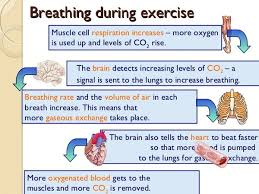 Types Of Breathing Patterns Why Its Important To Breathe Correctly While You Exercise Diet
