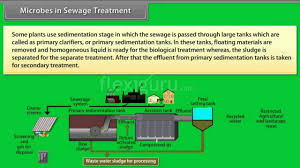 Microbes In Sewage Treatment