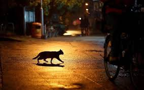urban cat silhouette night hd wallpaper desktop background tree a69