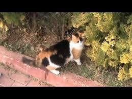 Sonbaharda Lara Parklarında Üç Renkli Kedi - In autumn, Lara Parks  Tri-color cat - YouTube
