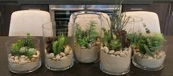can succulents survive without soil