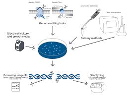 Genome Editing Psc Resource Handbook Genome Editing Thermo Fisher Scientific Br