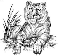 Small Picture Tiger Coloring Pages Kids Website For Parents