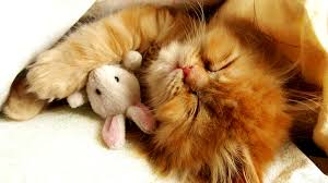 cute cats and kittens wallpapers.  Kittens Cute Kitten Wallpaper Throughout Cats And Kittens Wallpapers T