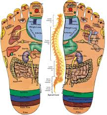 Foot Organ Chart Foot Reflexology Point Relation With Human Organ Diagram