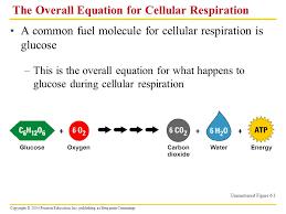 write the balanced summary equation for cellular respiration