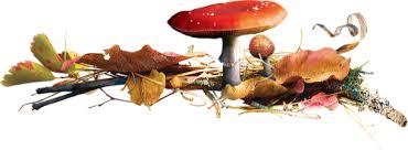 """Résultat de recherche d'images pour """"separateur de texte champignon"""""""