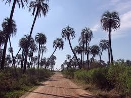 Parque Nacional el Palmar: características, leyenda, flora, fauna y más