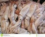 Images & Illustrations of calamary
