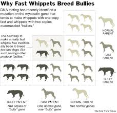 Why Fast Whippets Breed Bullies Nytimes Com