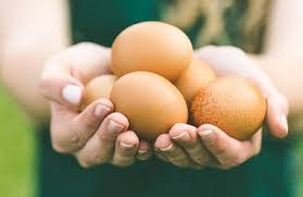 Image result for organic egg